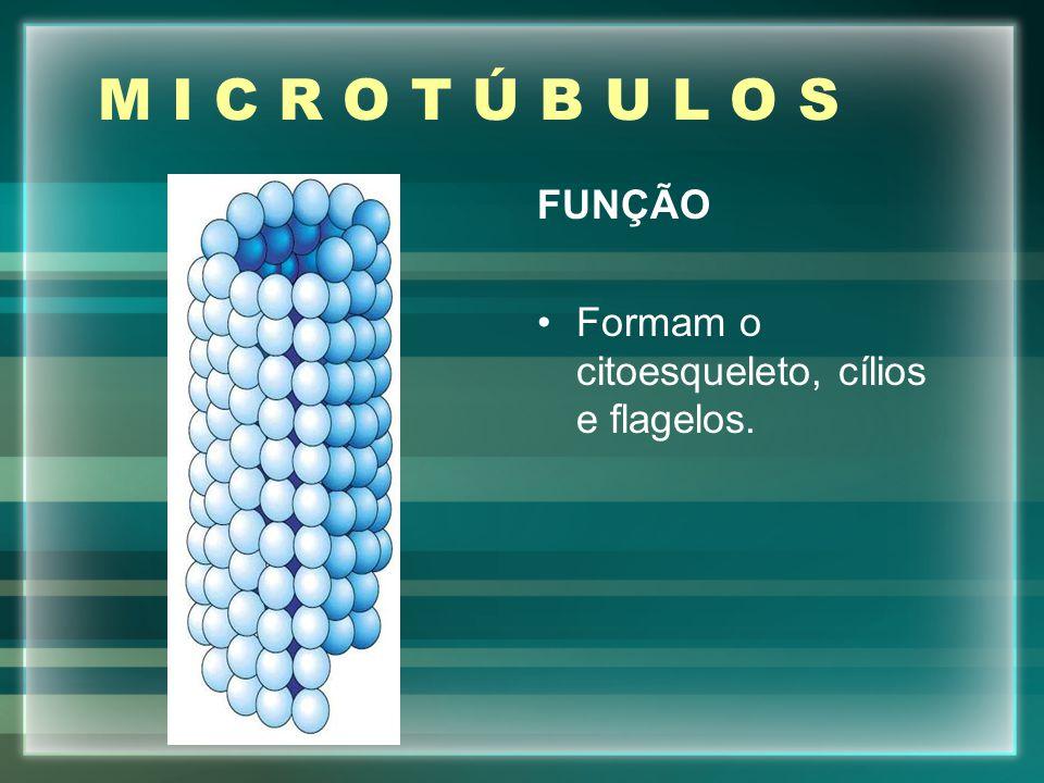 M I C R O T Ú B U L O S FUNÇÃO Formam o citoesqueleto, cílios e flagelos.