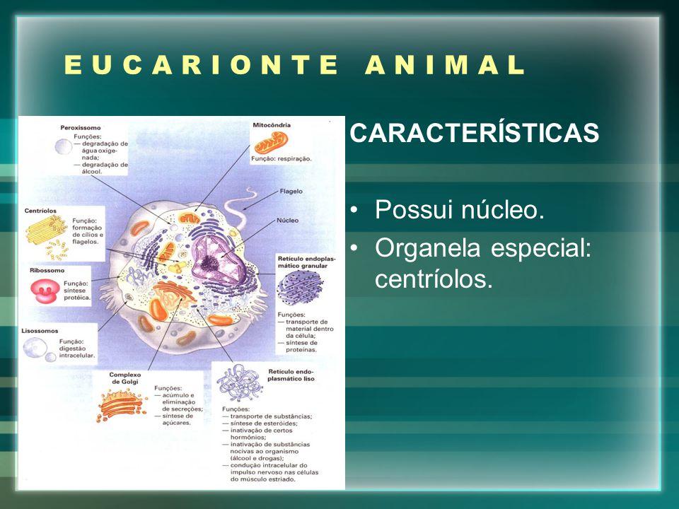 E U C A R I O N T E A N I M A L CARACTERÍSTICAS Possui núcleo. Organela especial: centríolos.