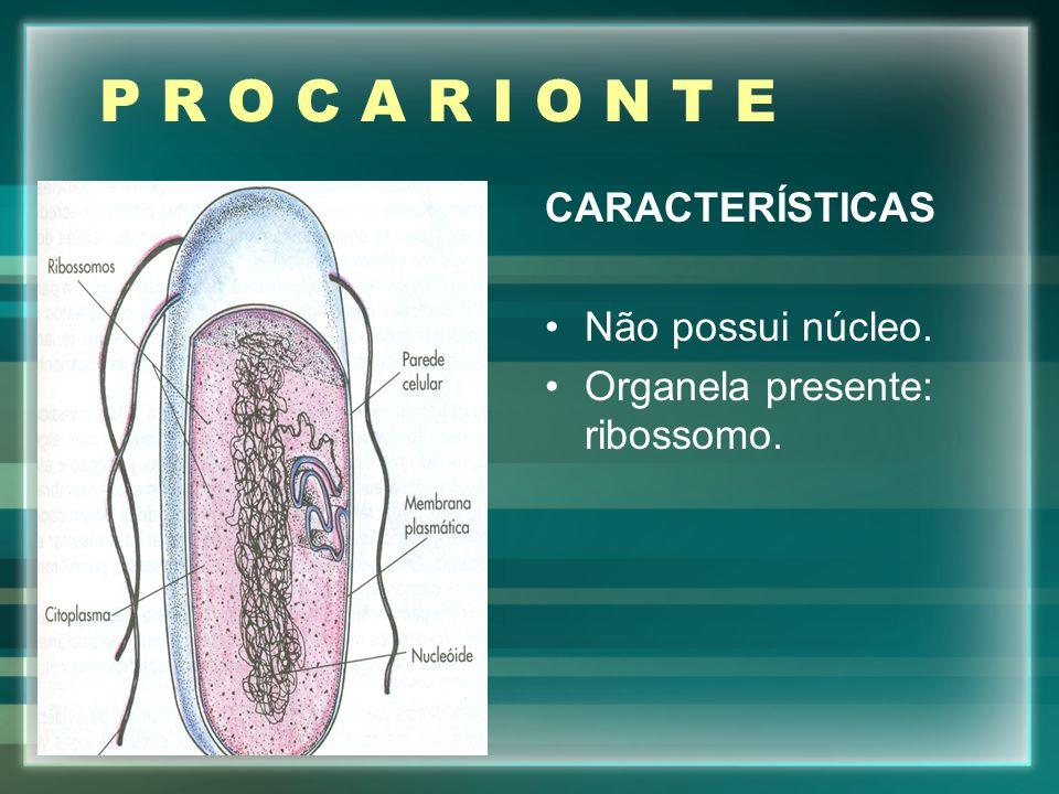 P R O C A R I O N T E CARACTERÍSTICAS Não possui núcleo.