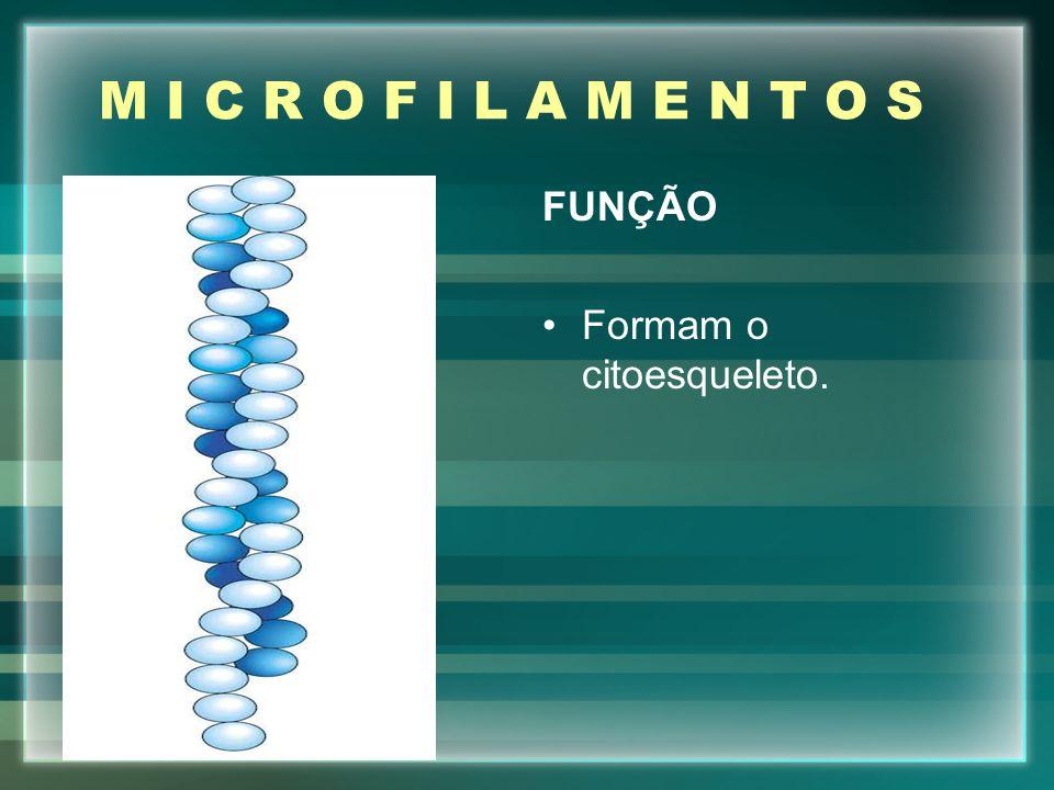 M I C R O F I L A M E N T O S FUNÇÃO Formam o citoesqueleto.