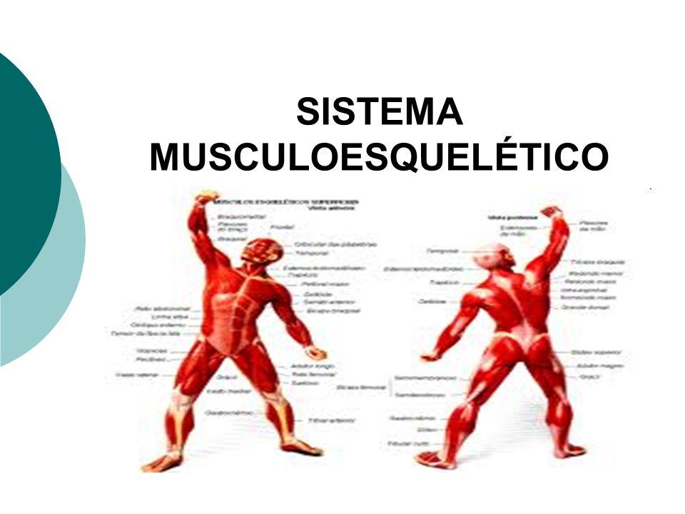 SISTEMA MUSCULOESQUELÉTICO - ppt video online carregar