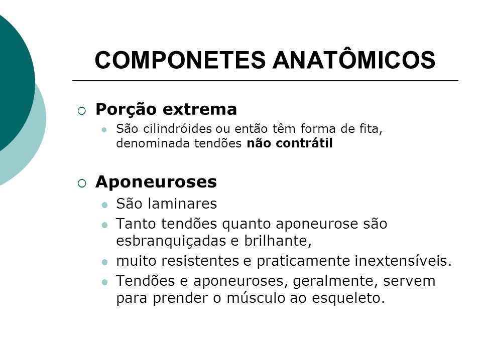 COMPONETES ANATÔMICOS