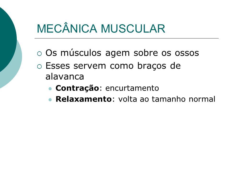 MECÂNICA MUSCULAR Os músculos agem sobre os ossos