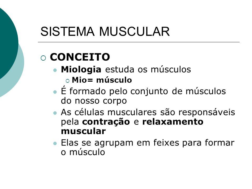 SISTEMA MUSCULAR CONCEITO Miologia estuda os músculos
