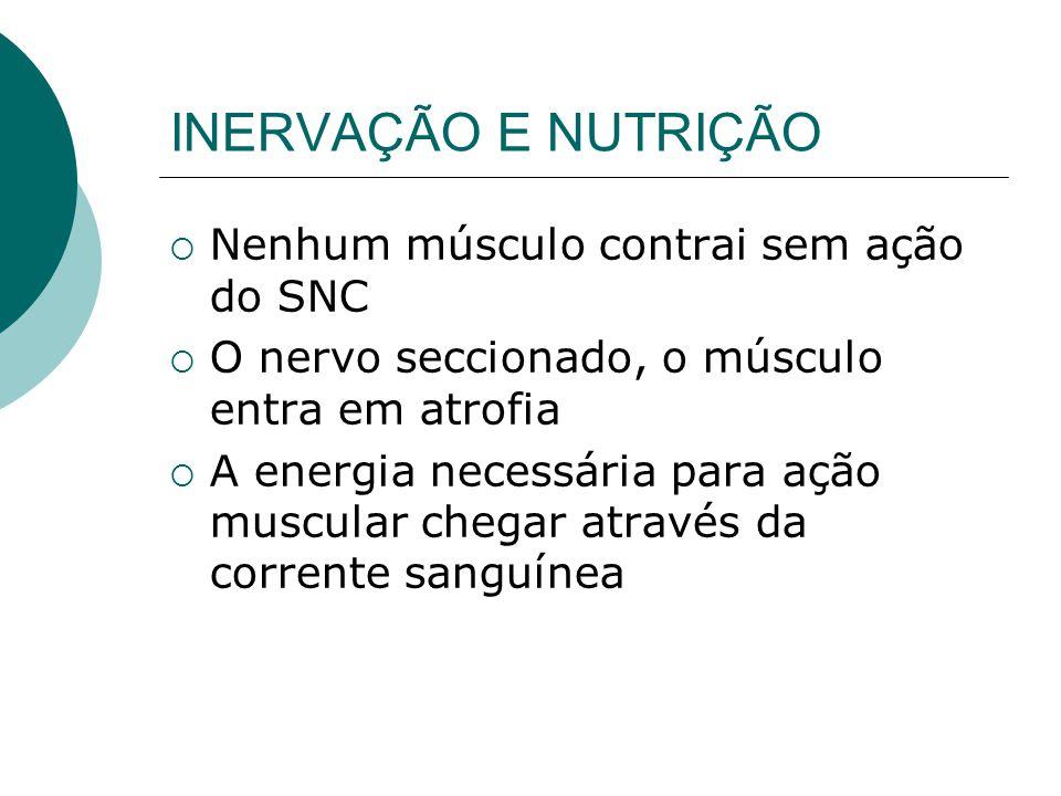 INERVAÇÃO E NUTRIÇÃO Nenhum músculo contrai sem ação do SNC