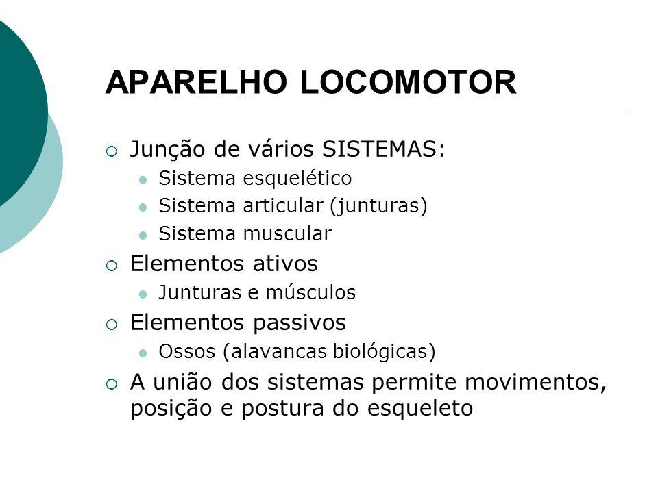 APARELHO LOCOMOTOR Junção de vários SISTEMAS: Elementos ativos