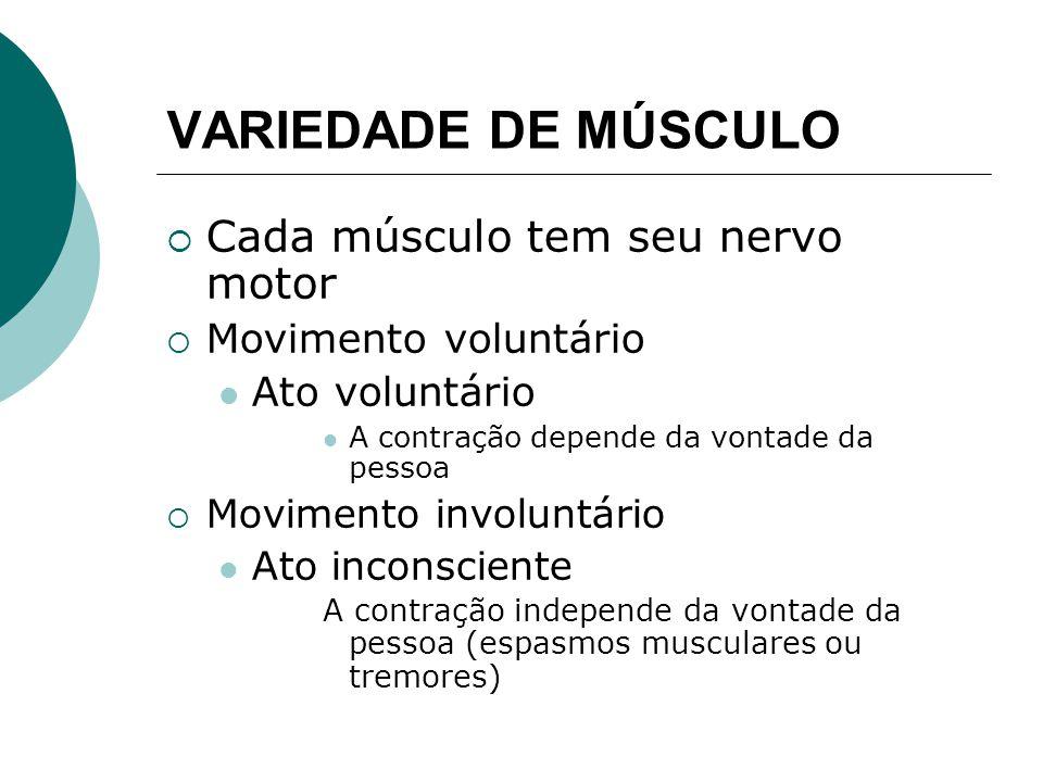VARIEDADE DE MÚSCULO Cada músculo tem seu nervo motor