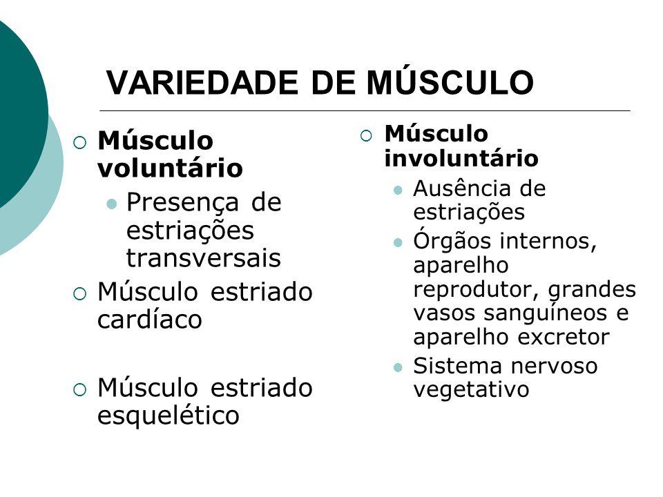 VARIEDADE DE MÚSCULO Músculo voluntário
