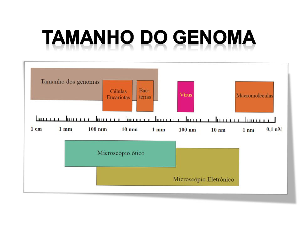 Tamanho do Genoma