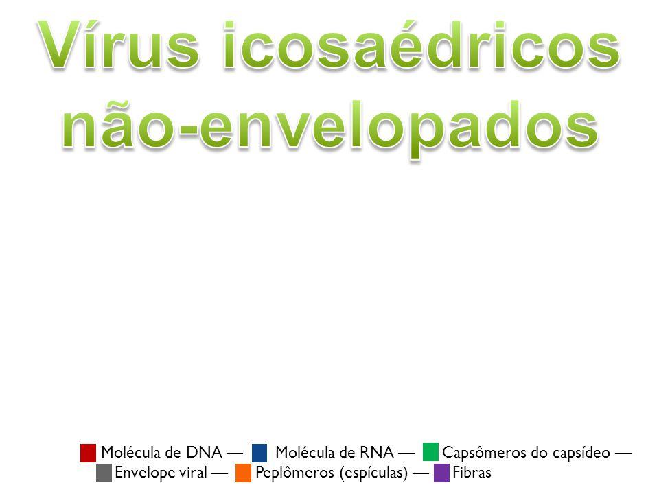 Vírus icosaédricos não-envelopados