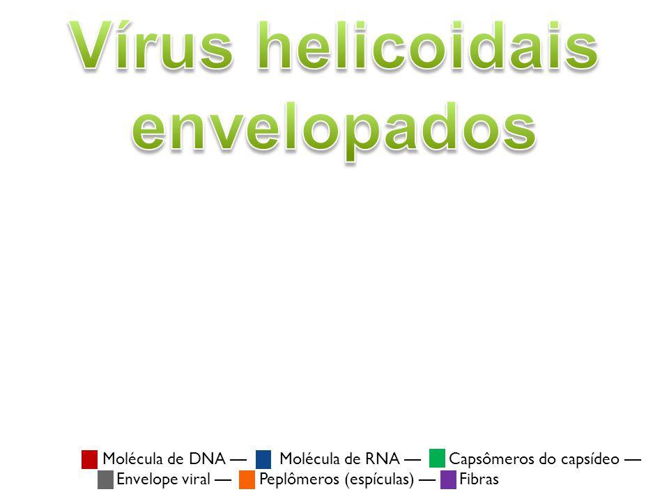 Vírus helicoidais envelopados