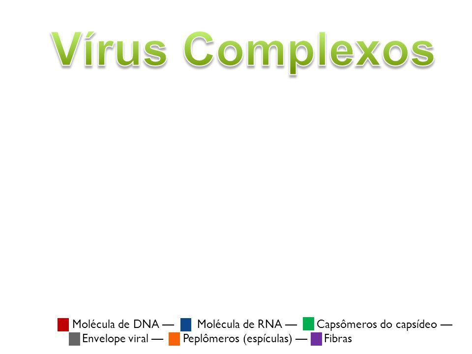Vírus Complexos