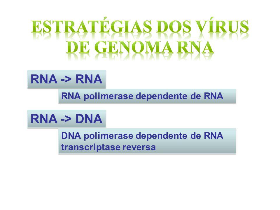 ESTRATÉGIAS DOS VÍRUS DE GENOMA RNA