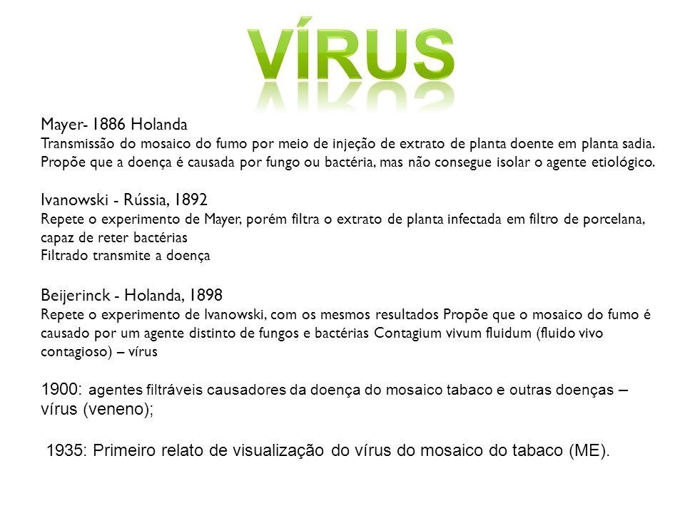 vírus Mayer- 1886 Holanda Ivanowski - Rússia, 1892