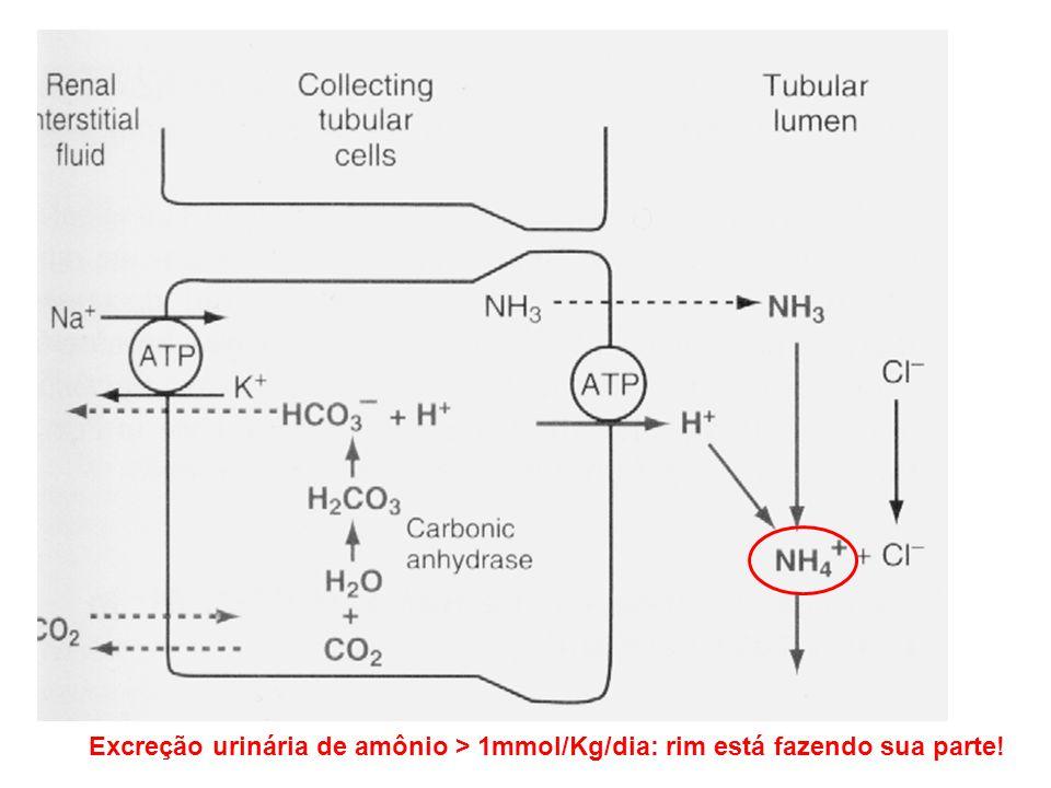 Excreção urinária de amônio > 1mmol/Kg/dia: rim está fazendo sua parte!