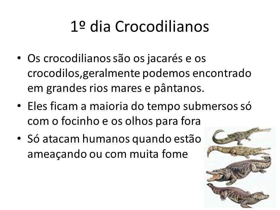 1º dia Crocodilianos Os crocodilianos são os jacarés e os crocodilos,geralmente podemos encontrado em grandes rios mares e pântanos.
