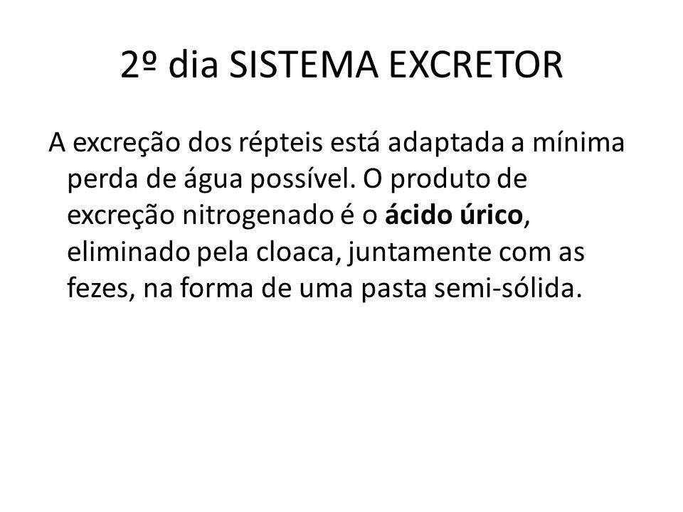 2º dia SISTEMA EXCRETOR
