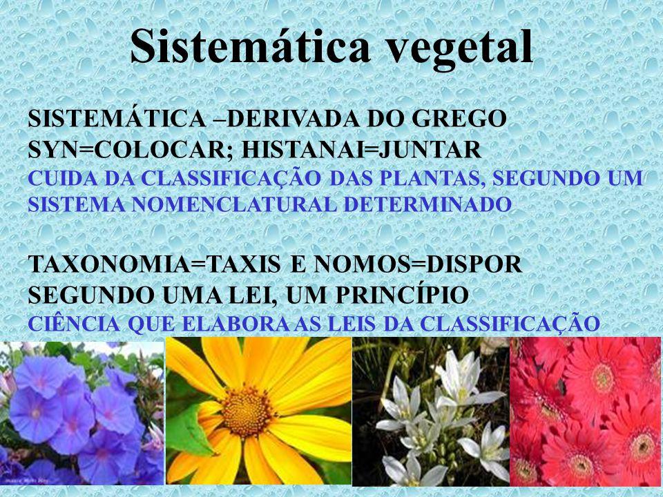 Sistemática vegetal SISTEMÁTICA –DERIVADA DO GREGO SYN=COLOCAR; HISTANAI=JUNTAR.
