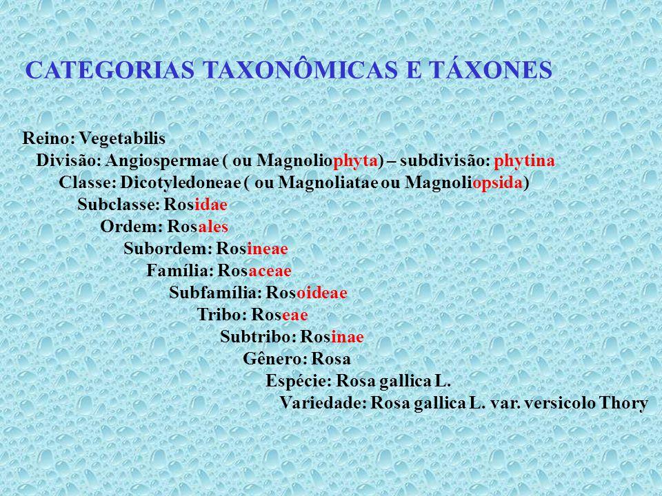 CATEGORIAS TAXONÔMICAS E TÁXONES