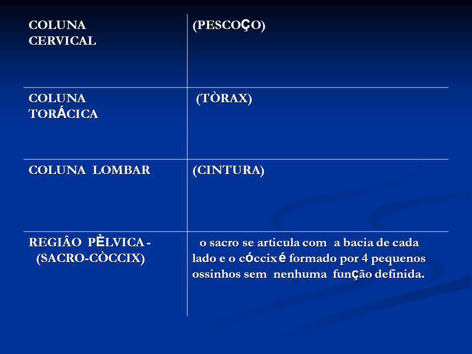 COLUNA CERVICAL (PESCOÇO) COLUNA TORÁCICA. (TÒRAX) COLUNA LOMBAR. (CINTURA)
