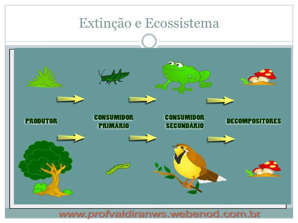 Extinção e Ecossistema
