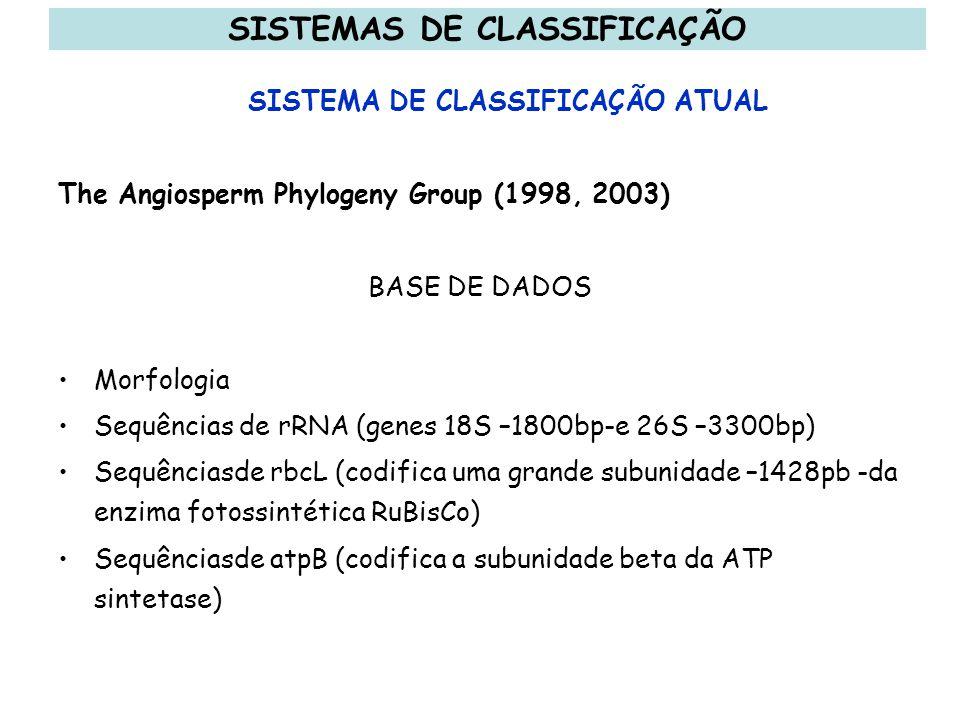 SISTEMAS DE CLASSIFICAÇÃO SISTEMA DE CLASSIFICAÇÃO ATUAL