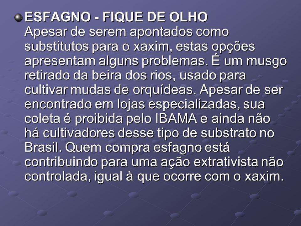 ESFAGNO - FIQUE DE OLHO Apesar de serem apontados como substitutos para o xaxim, estas opções apresentam alguns problemas.
