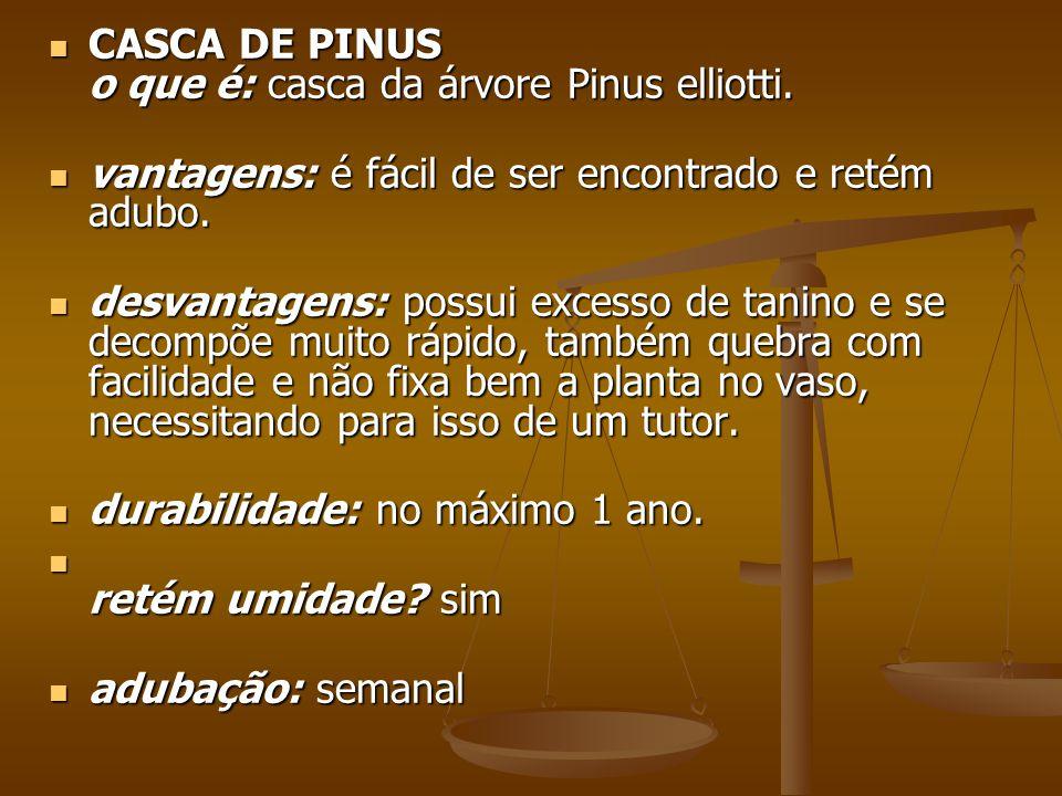 CASCA DE PINUS o que é: casca da árvore Pinus elliotti.