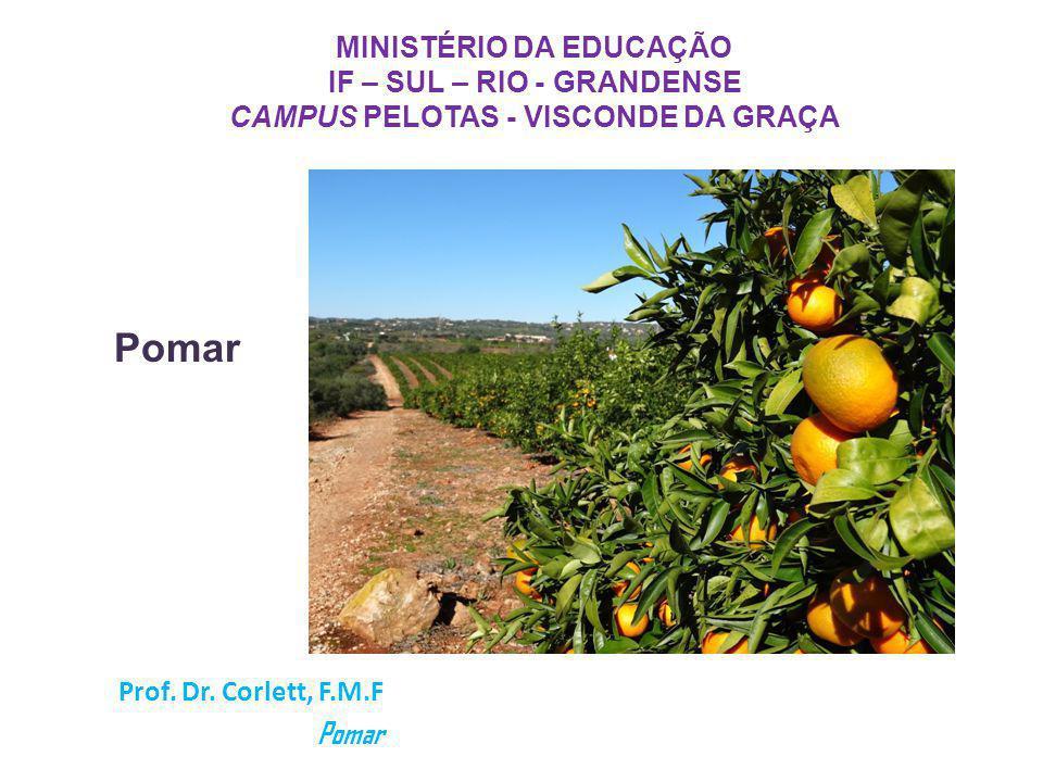 CAMPUS PELOTAS - VISCONDE DA GRAÇA