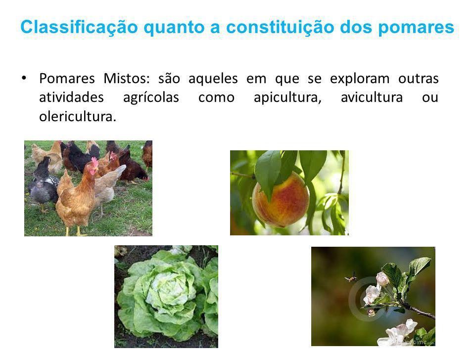Classificação quanto a constituição dos pomares
