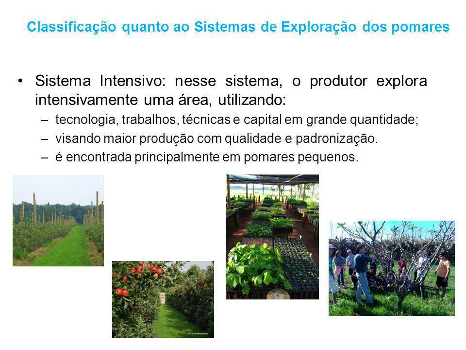 Classificação quanto ao Sistemas de Exploração dos pomares