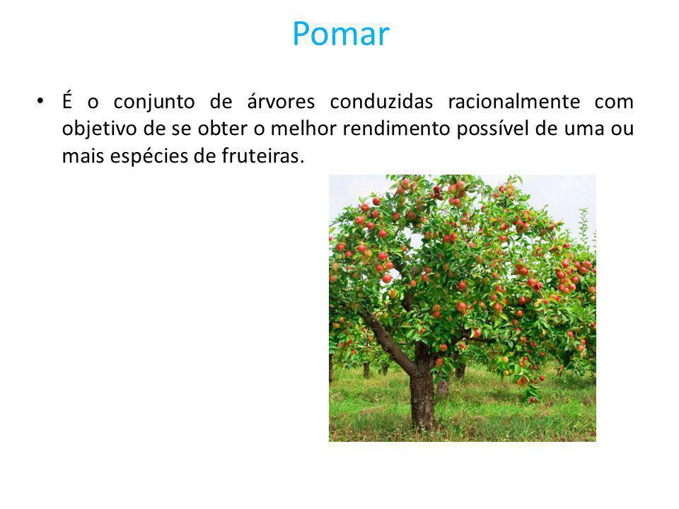 Pomar É o conjunto de árvores conduzidas racionalmente com objetivo de se obter o melhor rendimento possível de uma ou mais espécies de fruteiras.