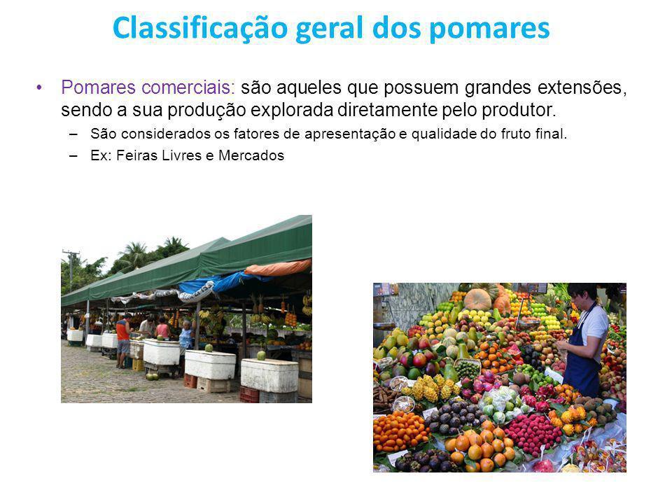 Classificação geral dos pomares