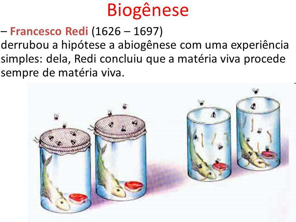 Biogênese – Francesco Redi (1626 – 1697)