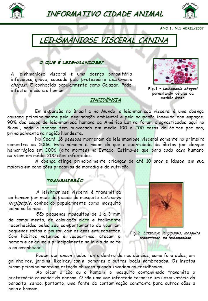 INFORMATIVO CIDADE ANIMAL LEIHSMANIOSE VISCERAL CANINA