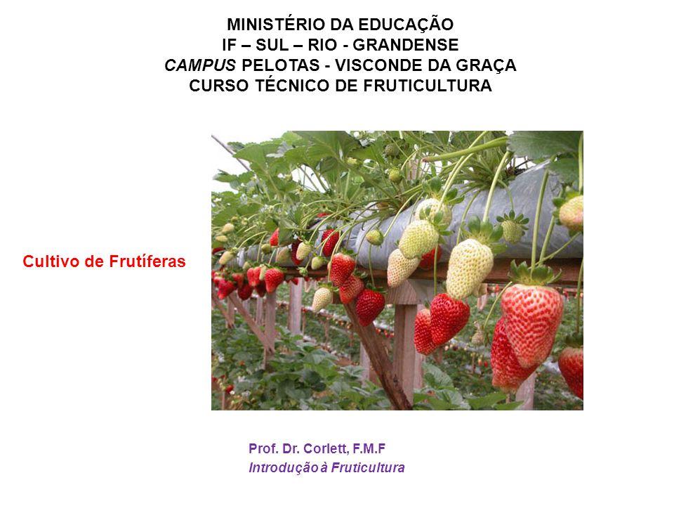 CAMPUS PELOTAS - VISCONDE DA GRAÇA CURSO TÉCNICO DE FRUTICULTURA