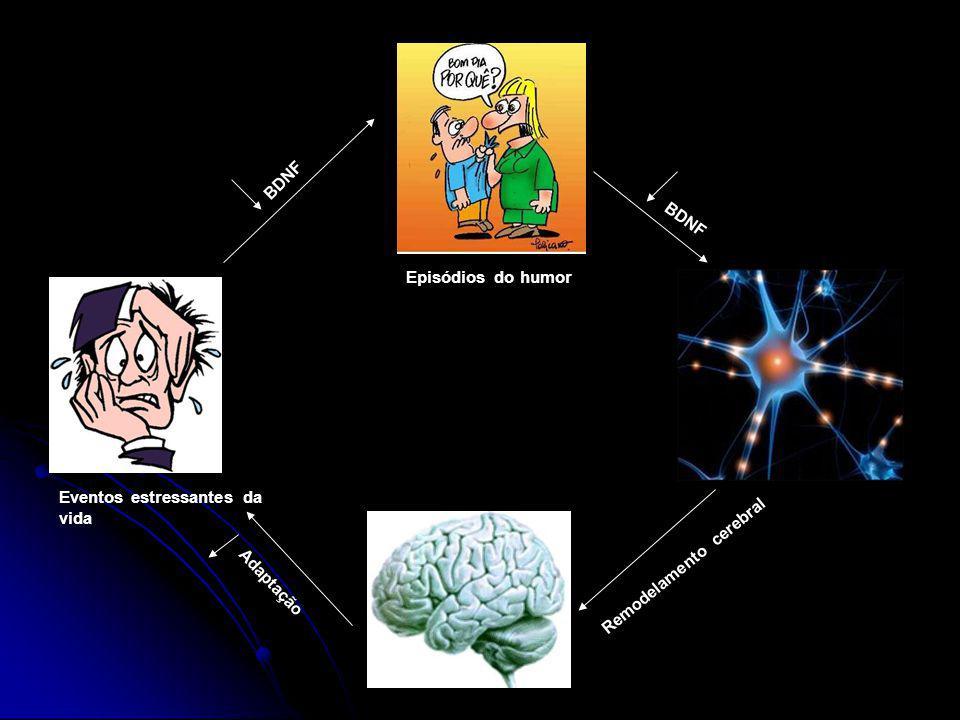 BDNF BDNF Episódios do humor Eventos estressantes da vida Remodelamento cerebral Adaptação
