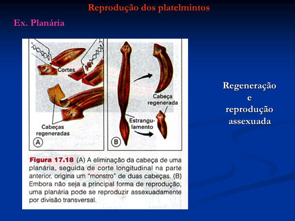 Reprodução dos platelmintos