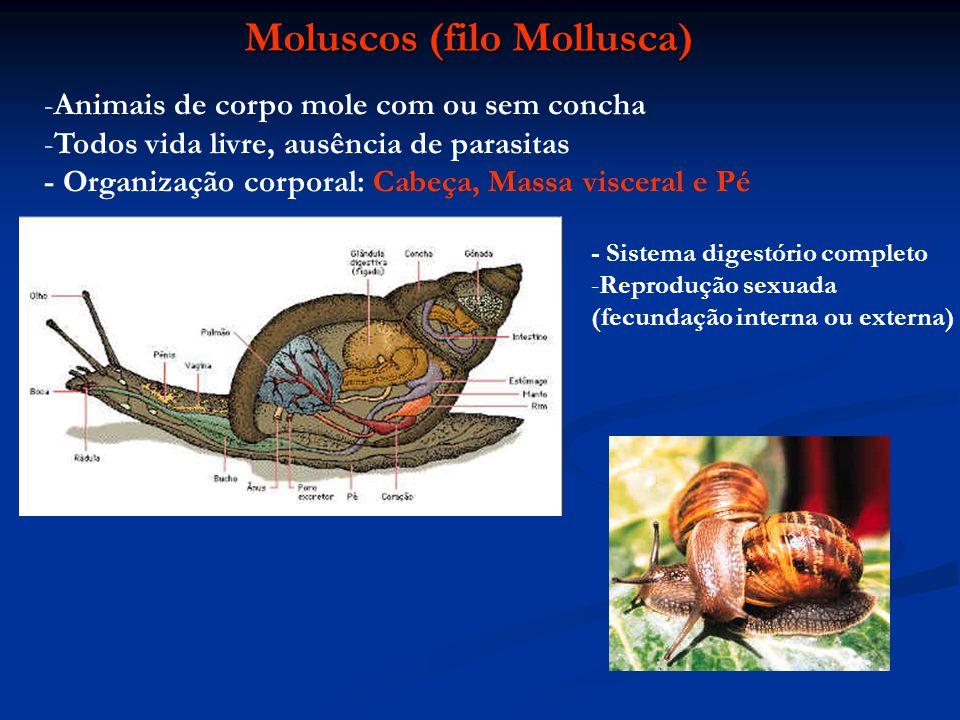 Moluscos (filo Mollusca)