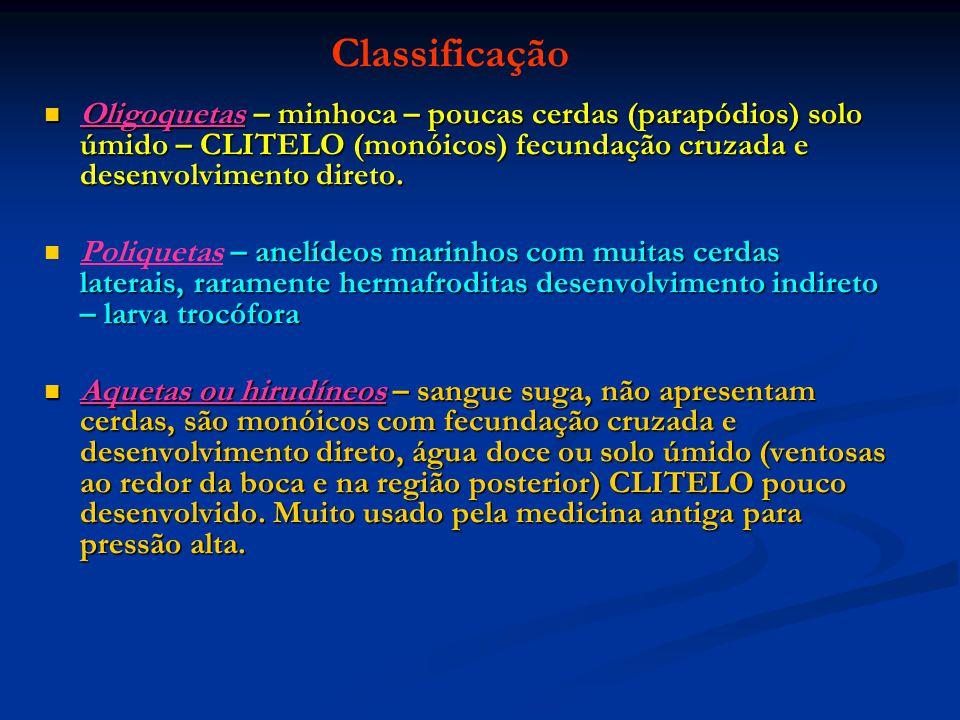 Classificação Oligoquetas – minhoca – poucas cerdas (parapódios) solo úmido – CLITELO (monóicos) fecundação cruzada e desenvolvimento direto.