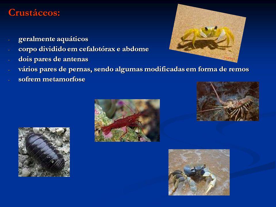 Crustáceos: geralmente aquáticos