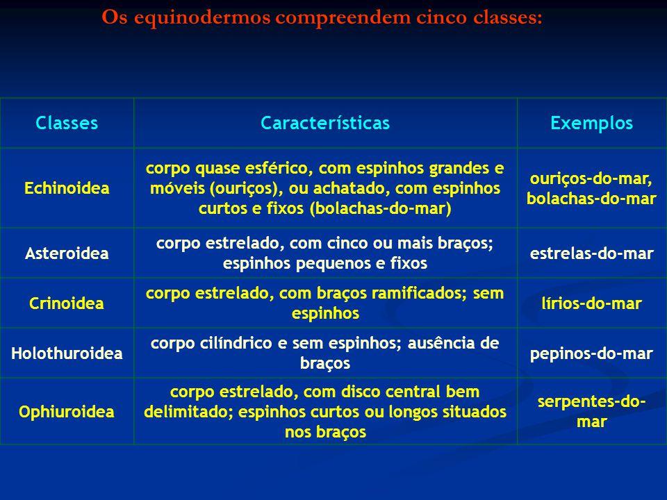 Os equinodermos compreendem cinco classes: