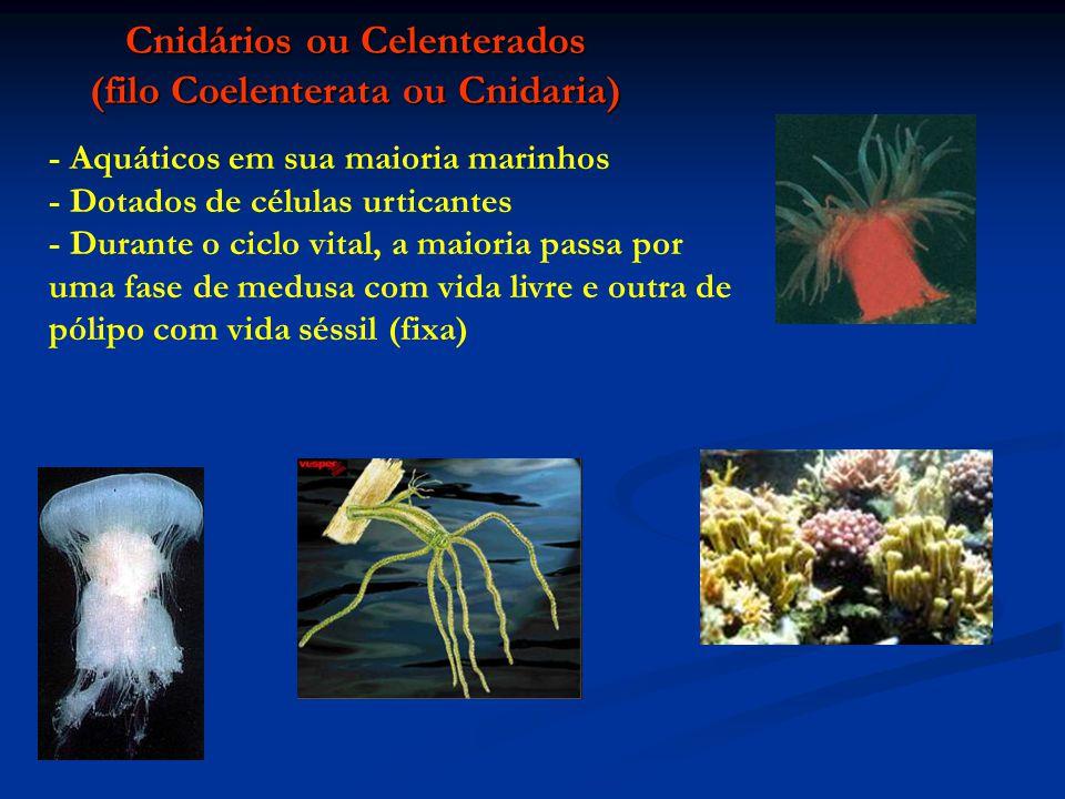 Cnidários ou Celenterados (filo Coelenterata ou Cnidaria)