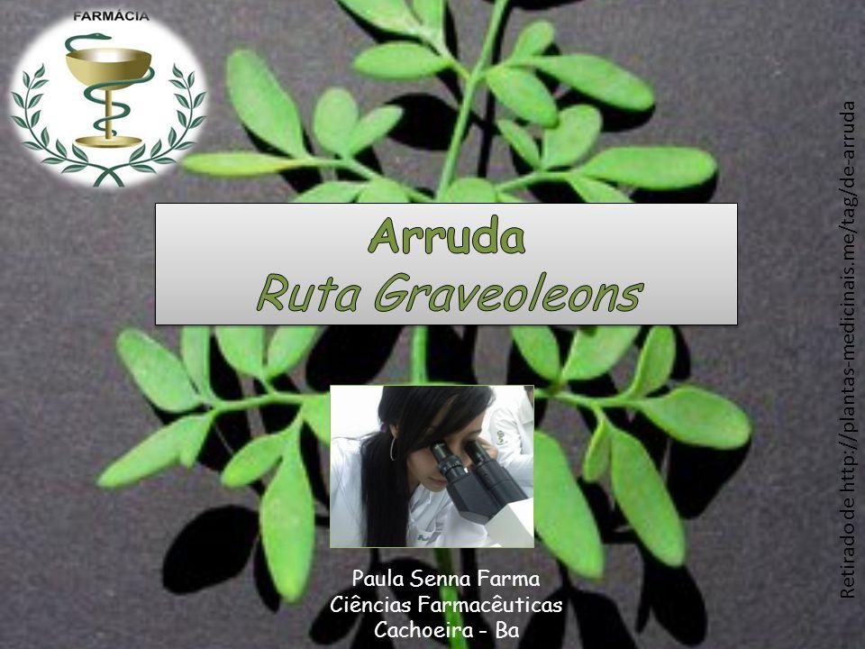 Arruda Ruta Graveoleons
