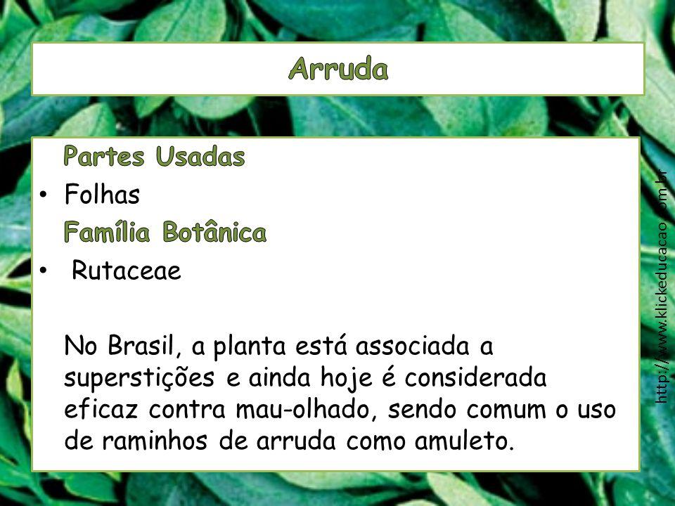 Arruda Partes Usadas Folhas Família Botânica Rutaceae