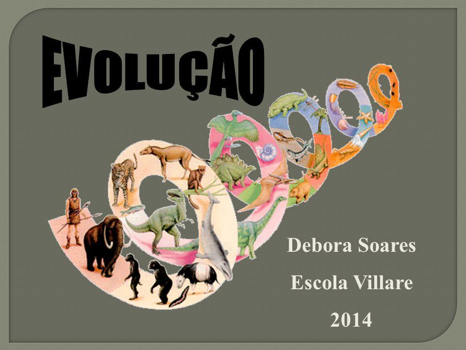 EVOLUÇÃO Debora Soares Escola Villare 2014