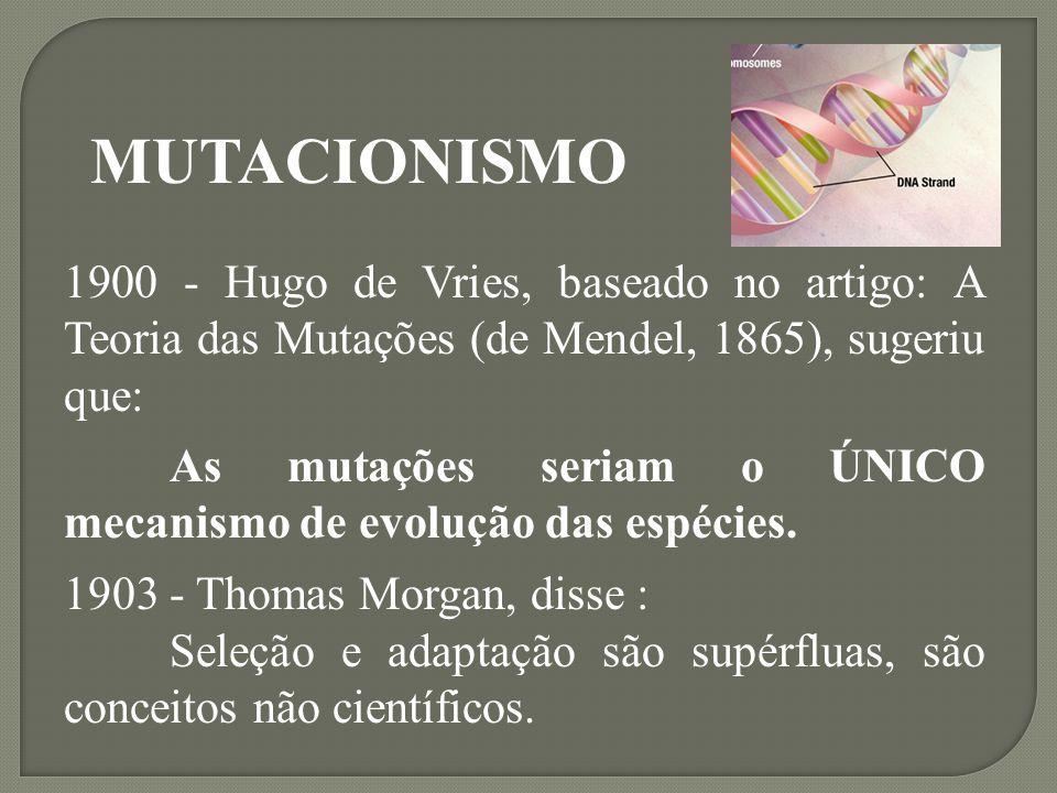 MUTACIONISMO 1900 - Hugo de Vries, baseado no artigo: A Teoria das Mutações (de Mendel, 1865), sugeriu que: