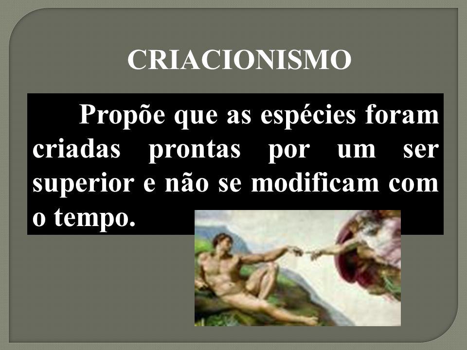 CRIACIONISMO Propõe que as espécies foram criadas prontas por um ser superior e não se modificam com o tempo.