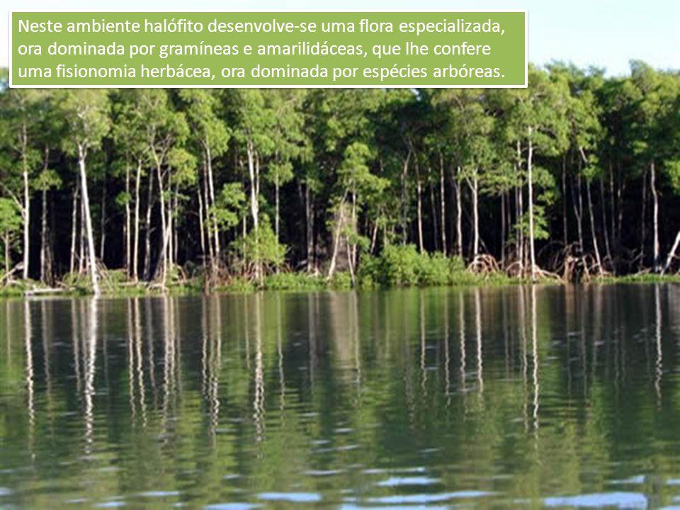 Neste ambiente halófito desenvolve-se uma flora especializada, ora dominada por gramíneas e amarilidáceas, que lhe confere uma fisionomia herbácea, ora dominada por espécies arbóreas.