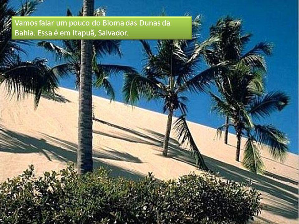 Vamos falar um pouco do Bioma das Dunas da Bahia